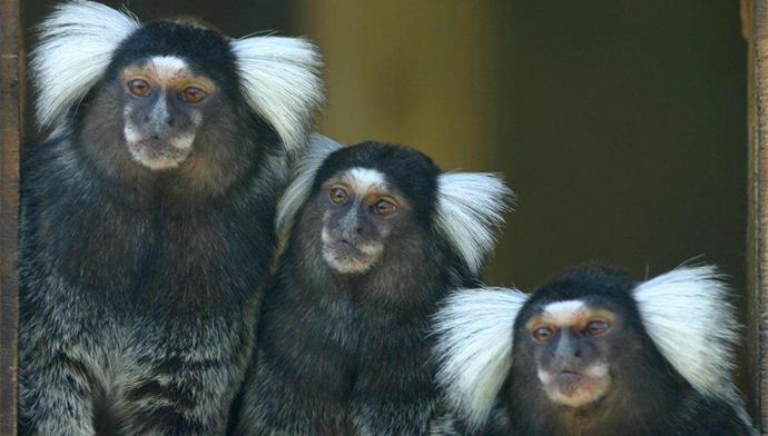 Borth Zoo